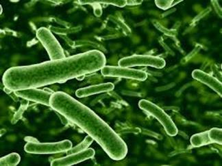 probiotic yeast