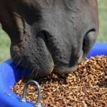 Spring clean your horse's diet 4