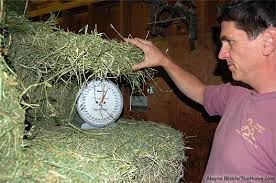 Hay weighing