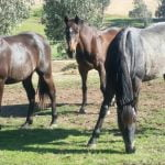 Spring clean your horse's diet 6