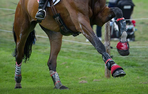 When should I start feeding a joint supplement to my horse? 4