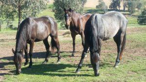 best natural diet horses grazing
