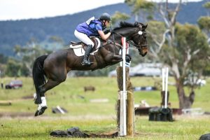 How to keep your horse fit, not fat 4