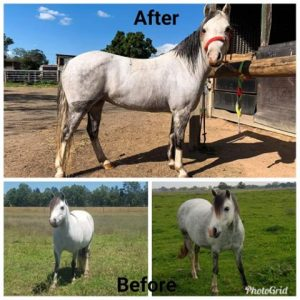 horse before and after