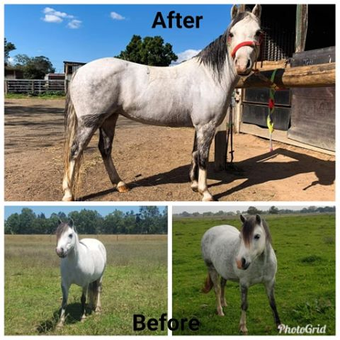 Managing weight loss in horses