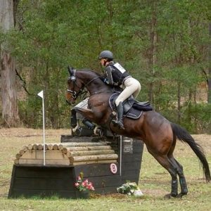 feeding orr weight gain in competition horses
