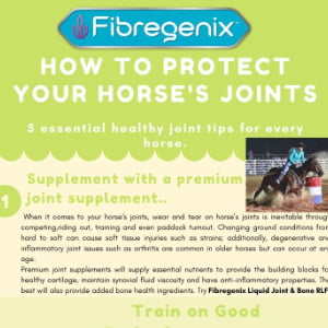 protecting horses joints