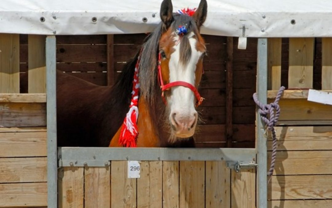 Horse show stabling
