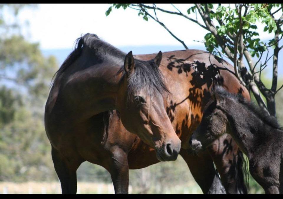 Horse's immune system