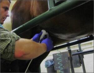 vet performing Transabdominal Ultrasound