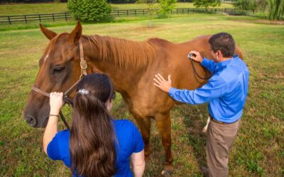 Preventing and Managing Hindgut Ulcers